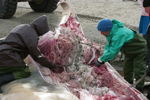 Snijden van de gewone vinvis
